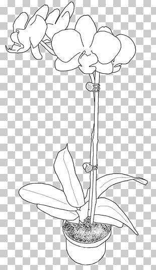 Floral Design Petal Paper Product Design PNG
