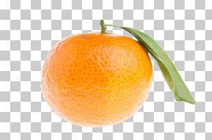Mandarin Orange Tangerine Clementine Bitter Orange Rangpur PNG