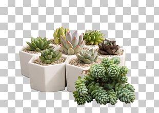Flowerpot Plant Bonsai PNG
