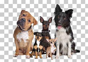 Labrador Retriever Puppy Cat Dog Breed Dog Type PNG