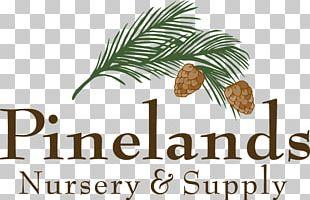 Pine Family CRIANDO MENINOS Food Book Font PNG