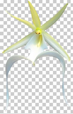 Flowering Plant PNG