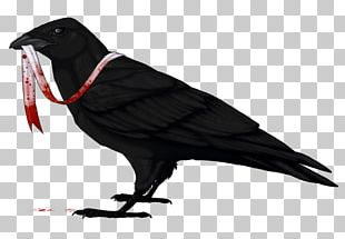 American Crow Common Raven Bird Drawing PNG