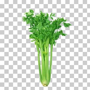Celeriac Leaf Celery Organic Food Vegetable Health PNG