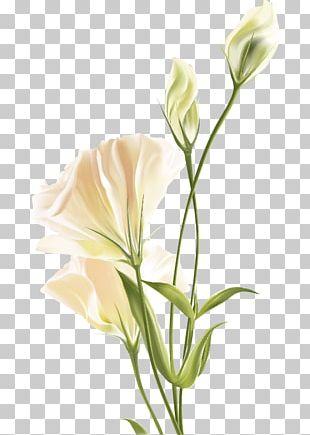 Flower Euclidean White PNG