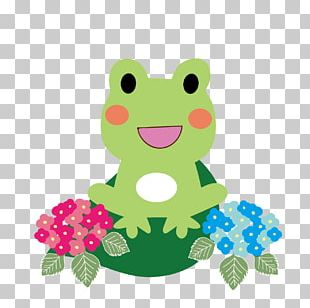 Tree Frog French Hydrangea East Asian Rainy Season PNG