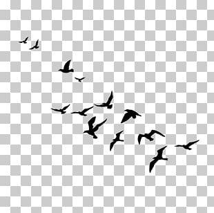 Bird Migration Water Bird Goose Cygnini PNG