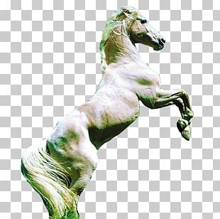 Arabian Horse Friesian Horse American Quarter Horse Pony Mare PNG
