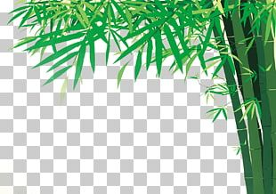 Bamboo Illustration PNG