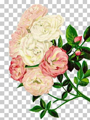 Flower Vintage Clothing Floral Design PNG