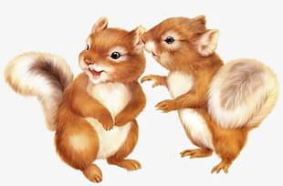 Two Little Squirrels PNG