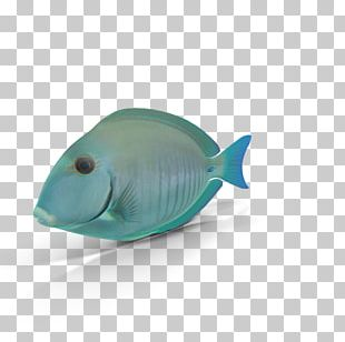 Blue Seabed Fish Organism PNG