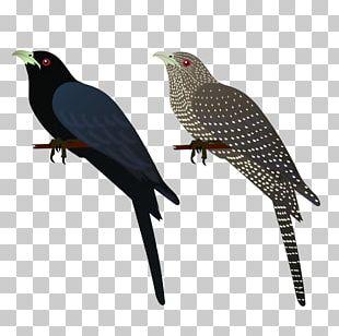 Asian Koel Bird House Crow Common Myna PNG