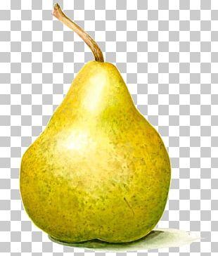 Pear Paper Watercolor Painting Drawing PNG