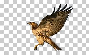Eagle Red-tailed Hawk Bird Of Prey PNG