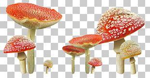 Edible Mushroom Autumn Fungus PNG
