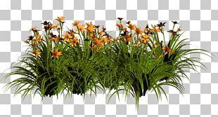 Grasses Floral Design Flowerpot Shrub PNG