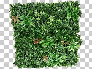 Plant Green Wall Garden Shrub PNG
