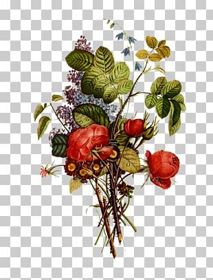 Fruit Flower Berry Floral Design PNG