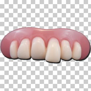 Human Tooth Dentures Dentistry Deciduous Teeth PNG