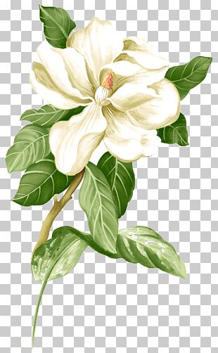 Painted White Jasmine Material PNG