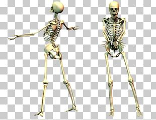 Human Skeleton Desktop PNG