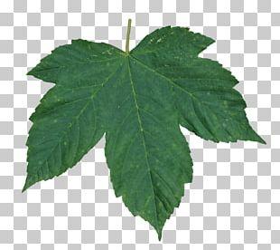 Resolution Leaf Display Resolution PNG