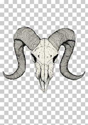 Skull Tattoo Drawing Sketch PNG