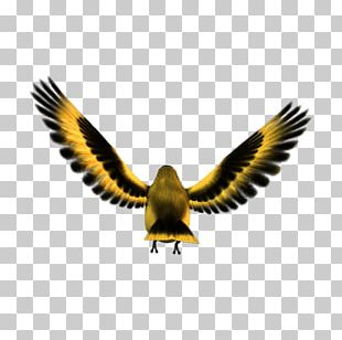 Bird Eagle Atlantic Canary Finches Computer Icons PNG