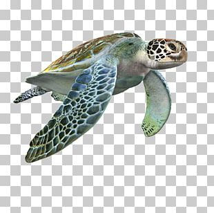 Loggerhead Sea Turtle 3D Modeling 3D Computer Graphics TurboSquid Texture Mapping PNG