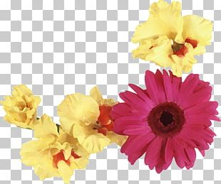 Transvaal Daisy Floral Design Flower Bouquet Floristry PNG