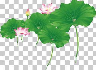 Nelumbo Nucifera Euclidean Leaf PNG