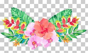 Floral Design Flower Illustration PNG