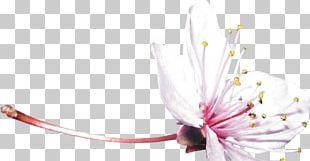 Shrub Flower Nature Desktop Tree PNG