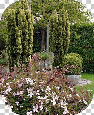 Botanical Garden Landscaping Tree Shrub PNG