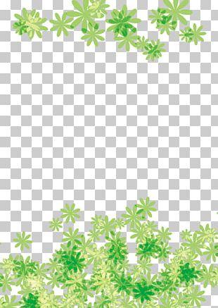 Plant Stem Leaf Flowering Plant PNG