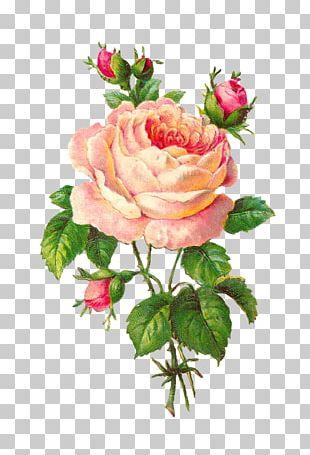 Rose Flower Floral Design Vintage Clothing PNG