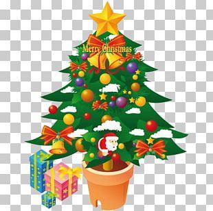 Fir Evergreen Christmas Decoration Pine Family Flowerpot PNG