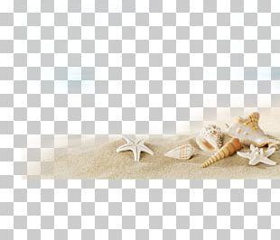 Beach Sunscreen Villa Seashell PNG