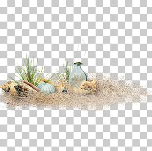 Sand Beach Computer File PNG