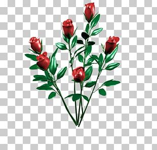 Cut Flowers Rosa × Alba Rose Family Floral Design PNG