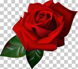Rose Animation Gfycat PNG