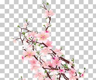Cherry Blossom Cut Flowers Floral Design Floristry PNG