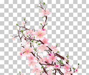 Cherry Blossom Cut Flowers Floral Design Floristry PNG