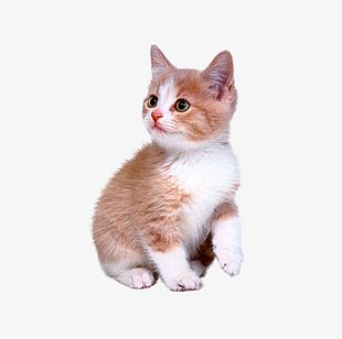 Cute Kitten PNG