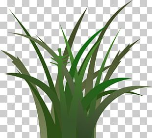 Free Content Lawn PNG