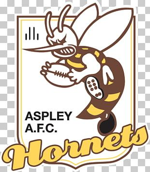 North East Australian Football League Aspley Football Club Aspley Hornets Football Club Canberra Football Club PNG
