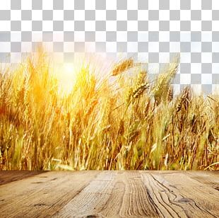 Wheat Fields Gold Banner PNG