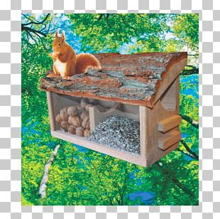 Red Squirrel Owl Bird House PNG