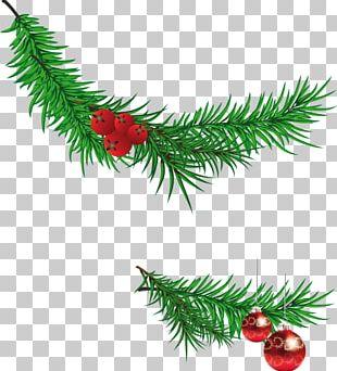 Santa Claus Christmas Tree Branch PNG